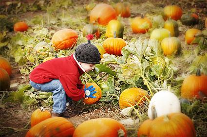 DSC_4991_pumpkin_pick