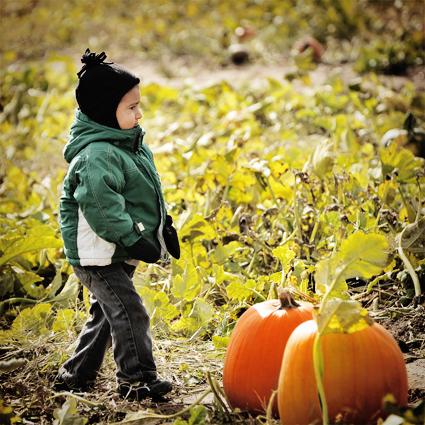 DSC_5003_pumpkin_joey